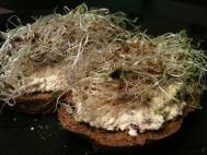 Eggless tofu salad on spelt bread with sprouts
